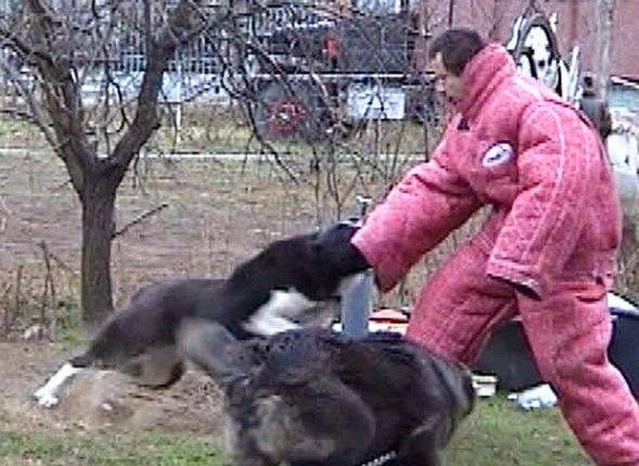 Cani Da Guardia E Cani Da Difesa