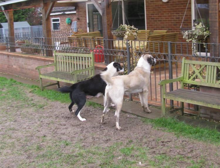 Quanti cani da guardia necessitano in giardino - Giardino per cani ...