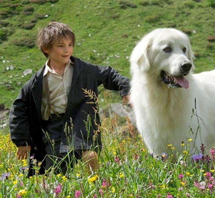 Belle e sebastien un film con il u cbollino giallou d anche per i