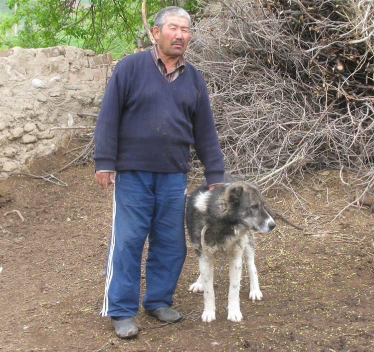 Cani Da Guardia Ecco Perché Sono Sempre Più Rari La Loro Genetica