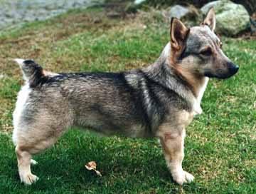 Strange Europeam Dog Breed